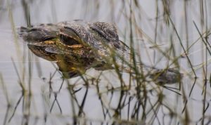 Bon Secour Wildlife Refuge is one of our favorite things to do during your Gulf Shores vacation