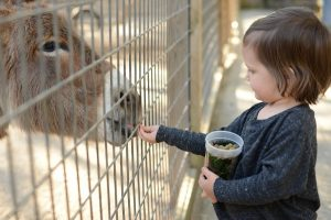 Visiting the Alabama Gulf Coast Zoo is one of our favorite things to do during your Gulf Shores vacation