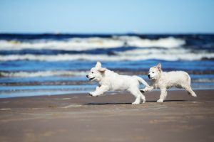 Dog-friendly beach houses aren't hard to find in Gulf Shores