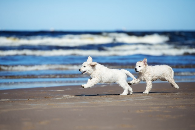 Dog-friendly beach houses in Gulf Shores