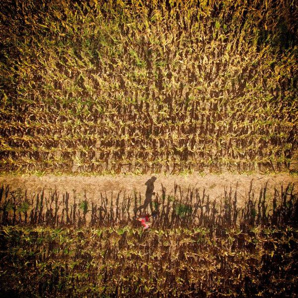 magnolia corn maze fort morgan al