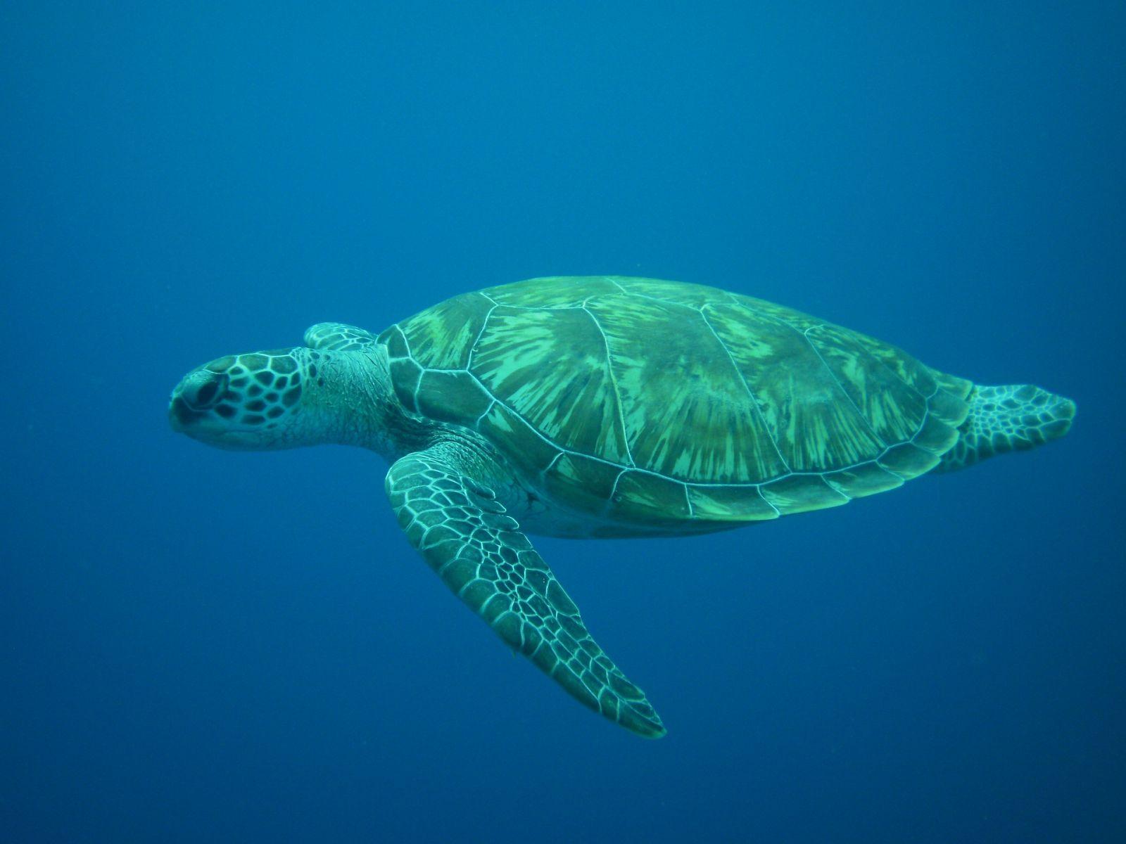 Alabama sea turtle tracking