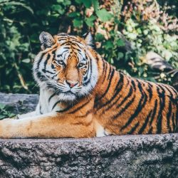 where to see animals gulf shores