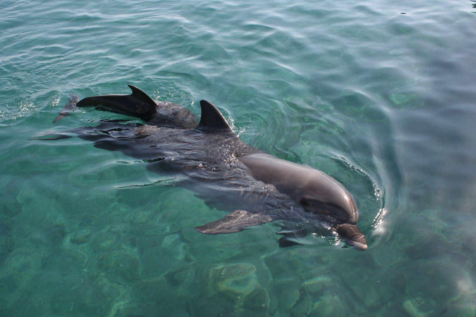 gulf shores dolphin tour