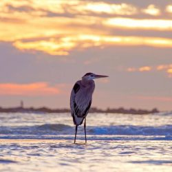 bird watching in gulf shores