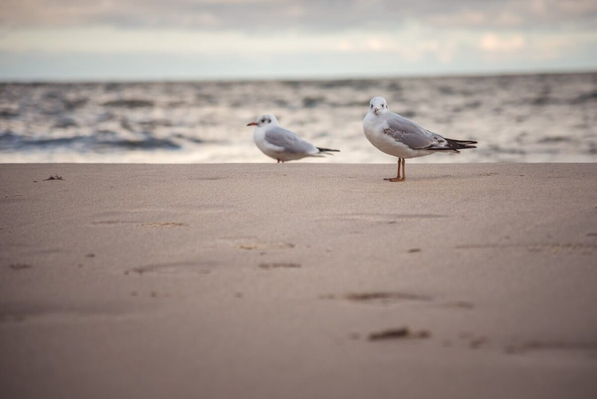 sea birds on the shore