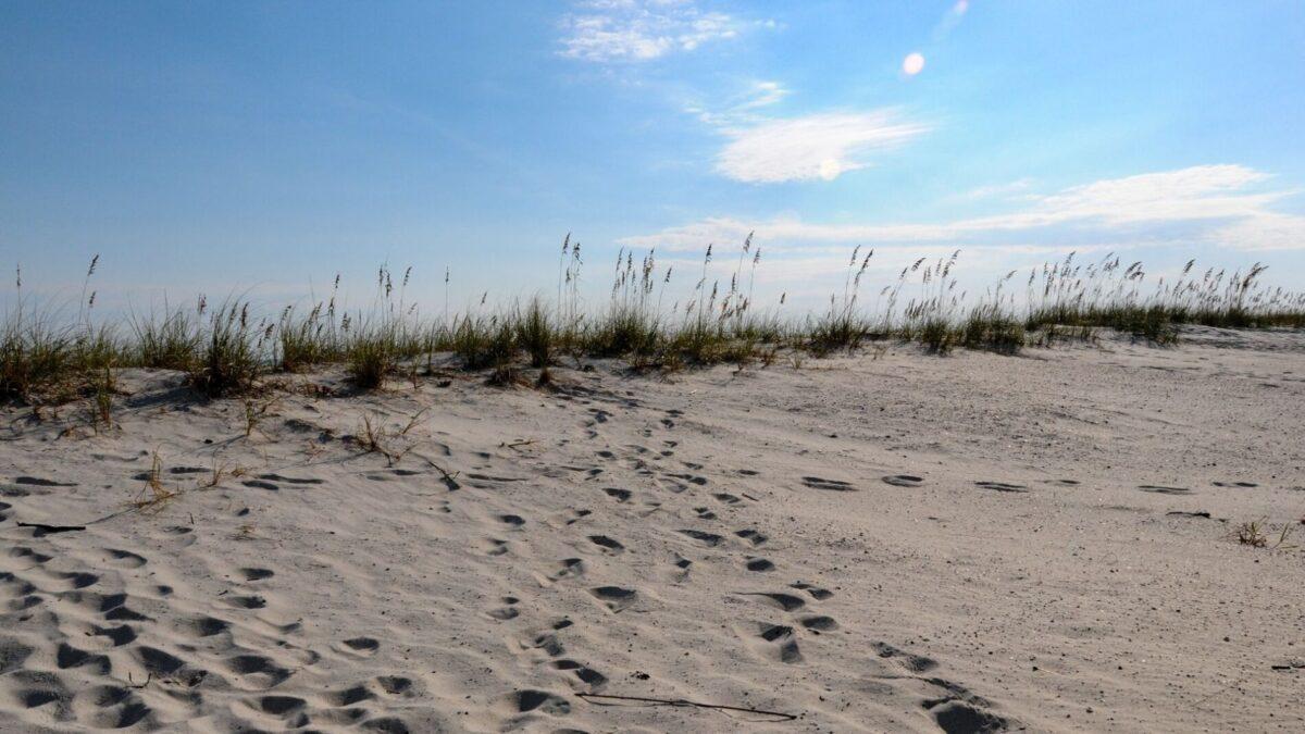 Gulf Shores beach trail in Gulf Shores State Park